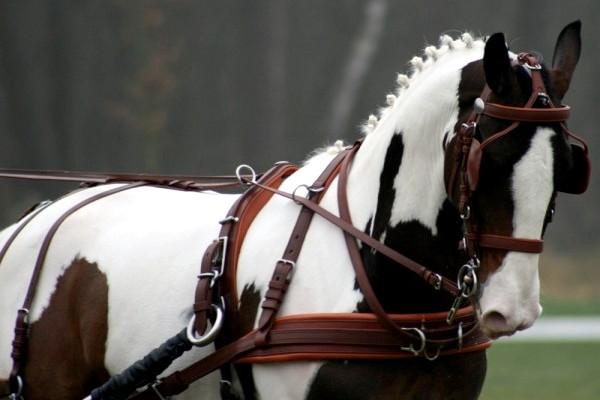 Ideal Harness - Chr van den Heuvel